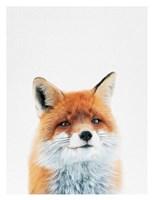 Fox Fine-Art Print