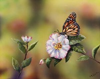 Monarch With Camellia Fine-Art Print