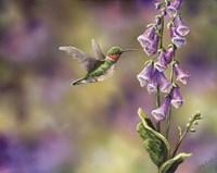 Spring Hummingbird Fine-Art Print