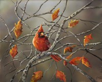 Fall Cardinal Fine-Art Print