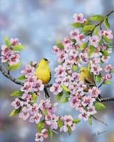 Finches In Cherry Tree Fine-Art Print