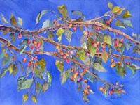 Crab Apple III Fine-Art Print