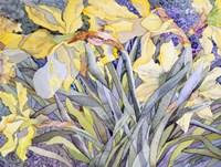 Daffodils, Van Vleck Fine-Art Print