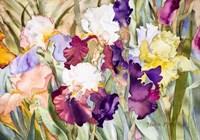 Iris Garden I Fine-Art Print