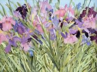 Iris Garden X Fine-Art Print