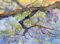 Wisteria, Van Vleck Fine-Art Print