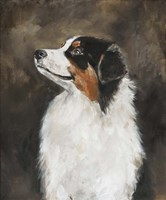 Australian Shepherd Fine-Art Print