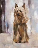 Silky Terrier I Fine-Art Print