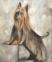 Silky Terrier II Fine-Art Print