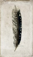 Feather 2 Fine-Art Print