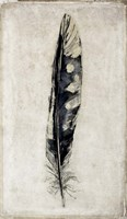 Feather 3 Fine-Art Print