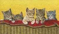 Five Kittens In Basket Fine-Art Print
