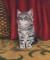 Grey Kitten And Red Curtain Fine-Art Print