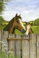 Mother And Foal Fine-Art Print