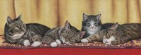 Relaxing Tabbies Fine-Art Print
