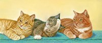 Tabbies Fine-Art Print