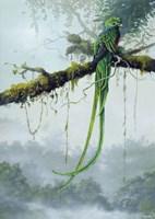 Resplendent Quetzal Fine-Art Print