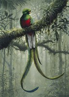 Resplendent Quetzal 2 Fine-Art Print
