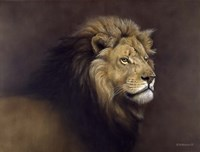 Lion Male Fine-Art Print