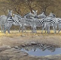 Zebras Fine-Art Print