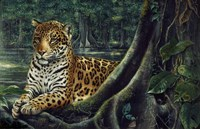 Jaguar By The River Fine-Art Print