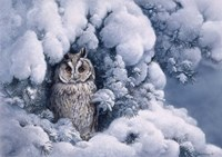 Long-Eared Owl Fine-Art Print