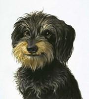 Dog Fine-Art Print