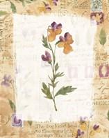 Dog Violet Fine-Art Print