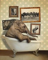 Elephant In Tub Fine-Art Print