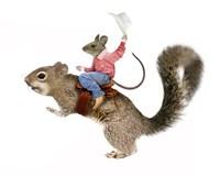 Squirrel Rodeo Fine-Art Print