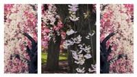Cherry Blossom Triptych Fine-Art Print