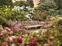 The Rose Garden Fine-Art Print