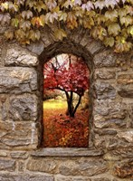 Window to Autumn Fine-Art Print