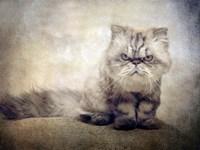 Cranky Cat Fine-Art Print