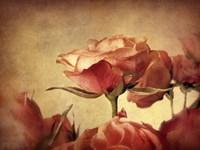 Gilded Roses Fine-Art Print