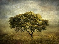 Mimosa Tree Fine-Art Print