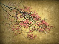 Asian Dogwood Fine-Art Print