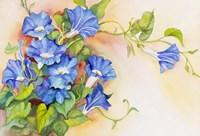 Morning Gloria Vine Stretching Fine-Art Print