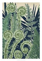 Fiddlehead Waltz I Fine-Art Print