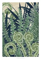 Fiddlehead Waltz II Fine-Art Print