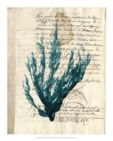 Vintage Teal Seaweed II Fine-Art Print