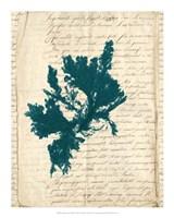 Vintage Teal Seaweed IV Fine-Art Print