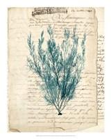Vintage Teal Seaweed VII Fine-Art Print