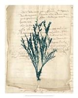 Vintage Teal Seaweed VIII Fine-Art Print