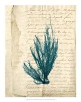 Vintage Teal Seaweed IX Fine-Art Print