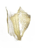 Gold Foil Shell III Fine-Art Print