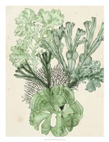 Seaweed Composition I Fine-Art Print