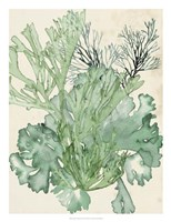 Seaweed Composition II Fine-Art Print