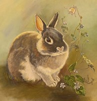 Rabbit In Columbine Fine-Art Print