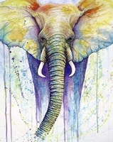 Elephant Colors Fine-Art Print